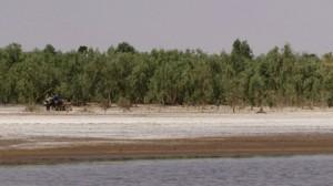 salinated land