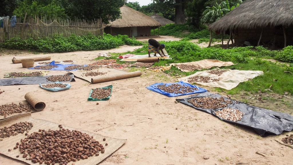 Guinea-Bissau: drying nuts