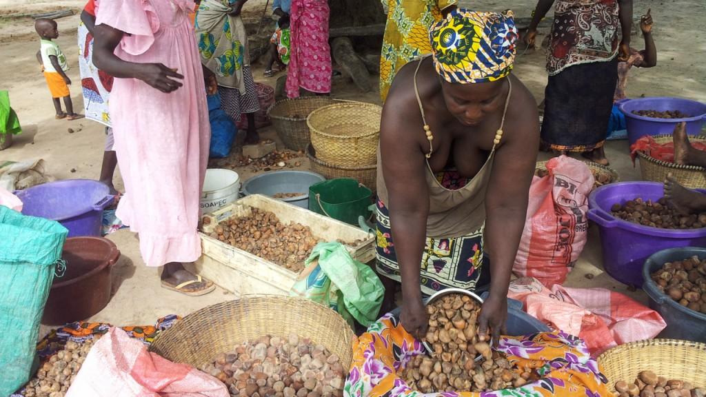 Guinea-Bissau women working with the nuts